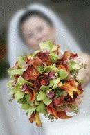 Magnolia Wedding Services